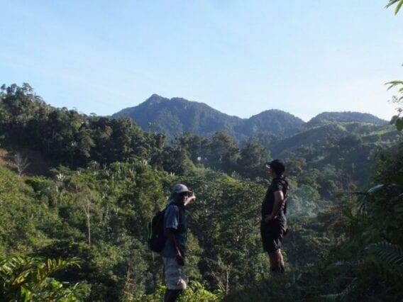 2020a 135 taf andriantantely forest by h. randriahaingo