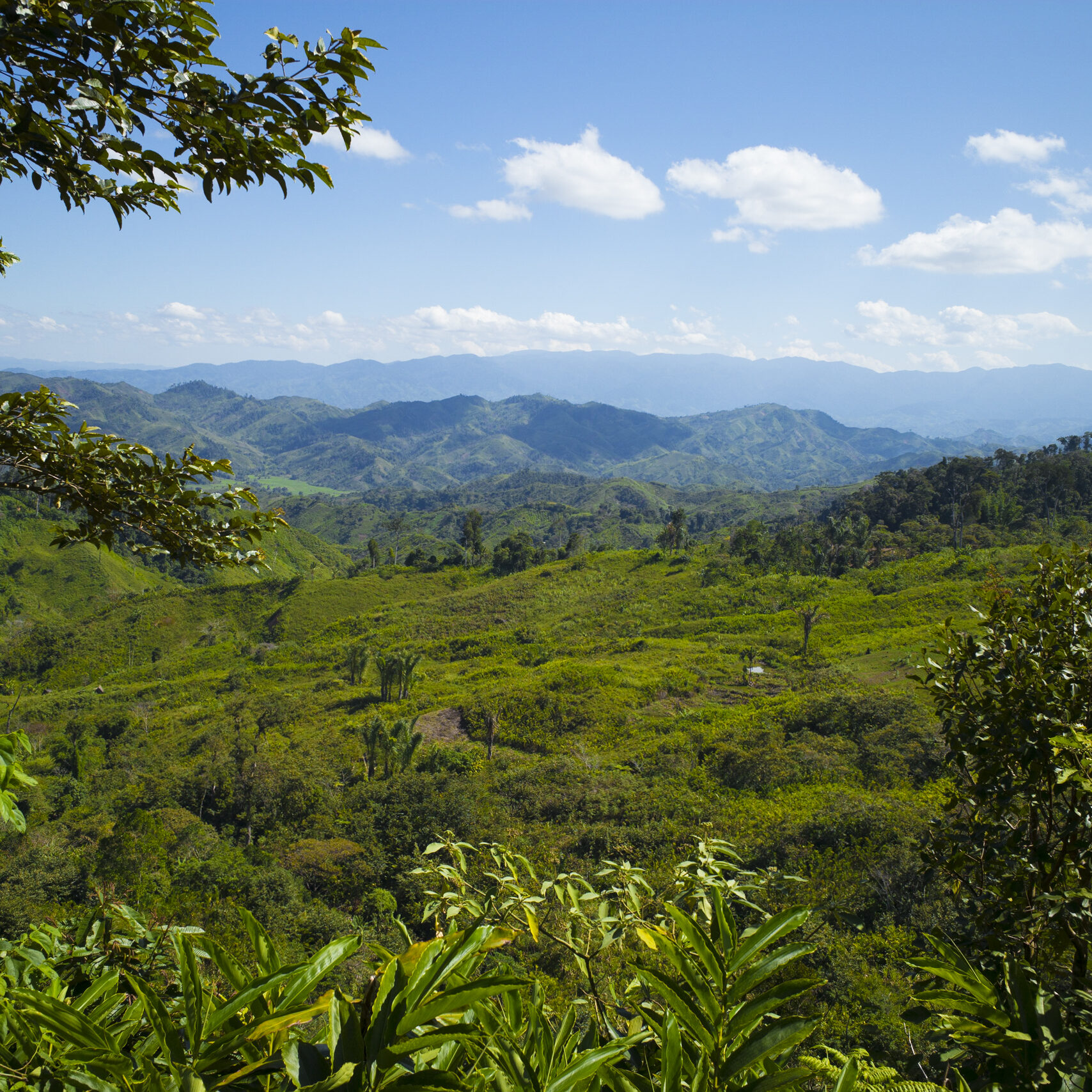 Humid forest in the Andapa Region of Madagascar