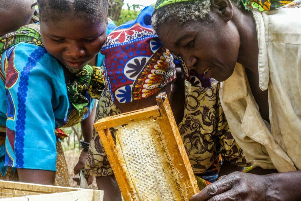 Locals in Malawi appreciating a honeycomb