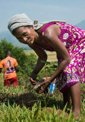Woman planting a tree in Africa