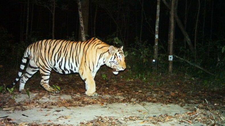 SMART was piloted with tiger conservation and has since been deployed across many situations