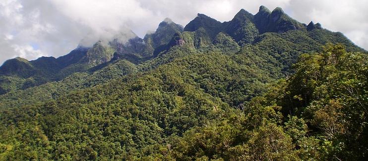Conservation of the Fiji Acmopyle