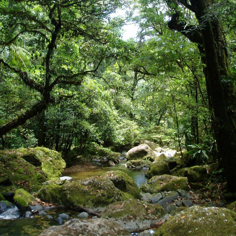Forest habitat on the Masoala Peninsula