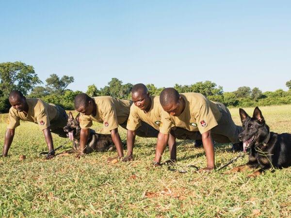 K9 Unit Exercising together