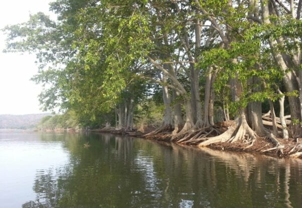 The riverine habitat along the Kaveri River