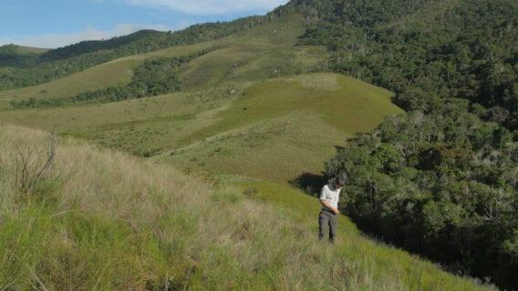 Propithecus diadema in Betampona Reserve