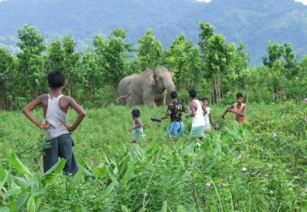 Elephant close to villagers