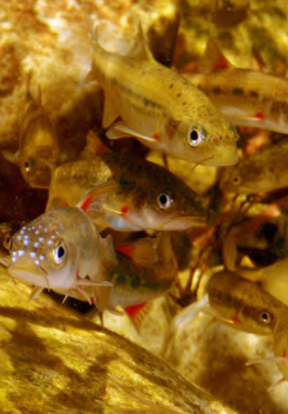 Barrydale Redfins in the Huis River