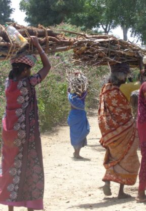 Women collecting firewood