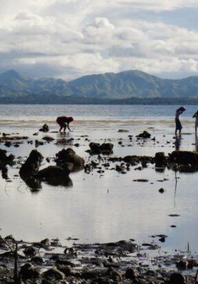 Women gleaning along the shoreline