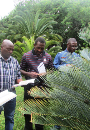Identifying cycads species is crucial in order to apply correct charges