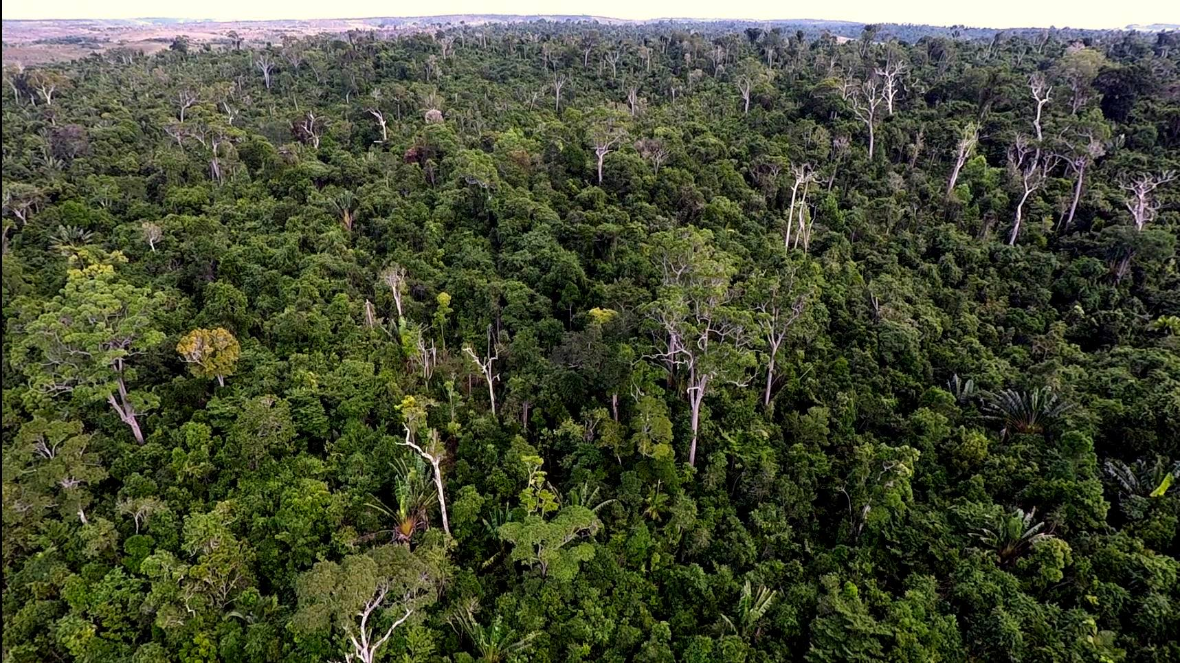 Manombo Forest Madagascar