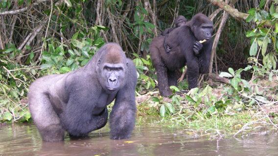 Djembo, Téké and Makoua in 2005