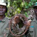 Two rangers holding a snare in Uganda